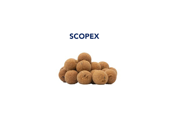 boiles scopex